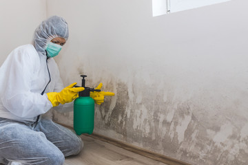 Easy Mold Clean Up For Your Home