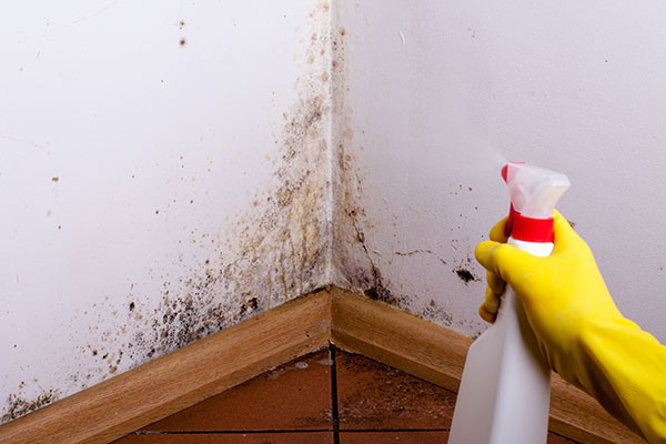 Here Are Some Ways You Can Keep Mold Out Of Your Home
